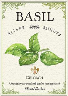 start a basil garden